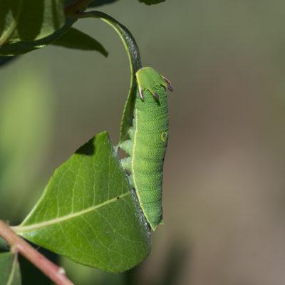 Insectos e Artrópodes